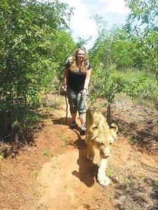'Tail gating' a lion in Livingstone, Zambia.